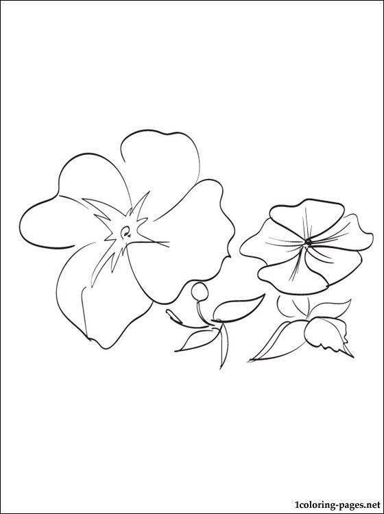 impatiens printable and coloring page coloring pages