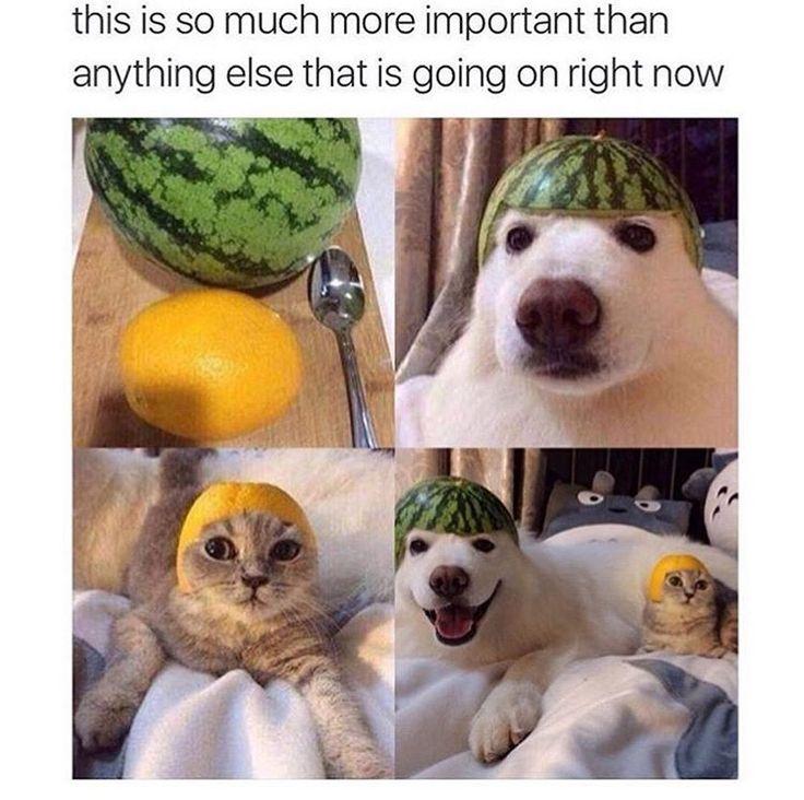 Viral Photos Viral Images Funny Memes