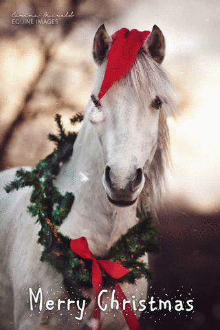 christmas animal winter horse holidays