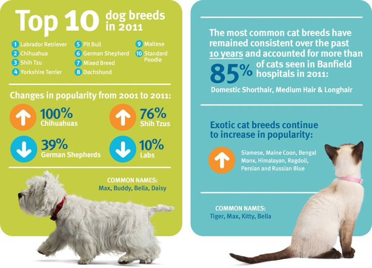 Common Dog Breeds & Common Cat Breeds - Infographic - Banfield State of Pet Health 2012