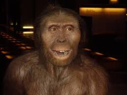 Australopithecus es un género extinto de primates homínidos que comprende seis especies. Las especies de este género habitaron en África