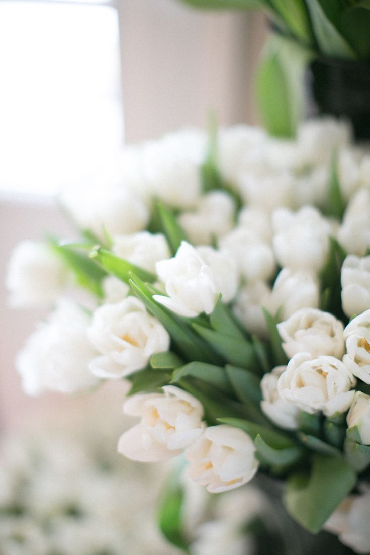 226 best white flowers images on pinterest white flowers black and white party dhlflorist Image collections
