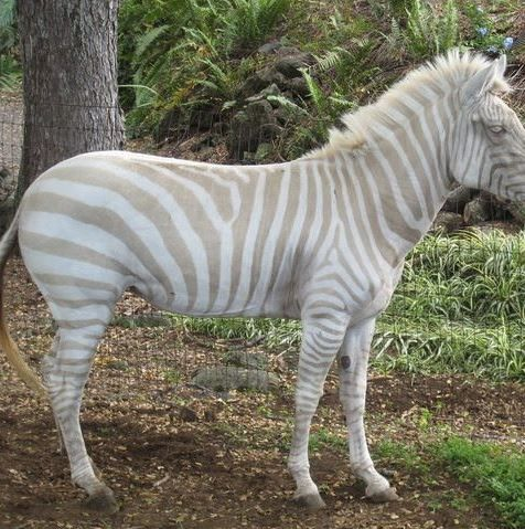 20+ Rare Albino Animals You Probably Have Never Seen Before – Tiere