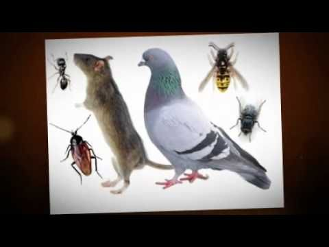 Ant Exterminator In Portland Oregon  Ants  Bugs Be Gone Pest Control