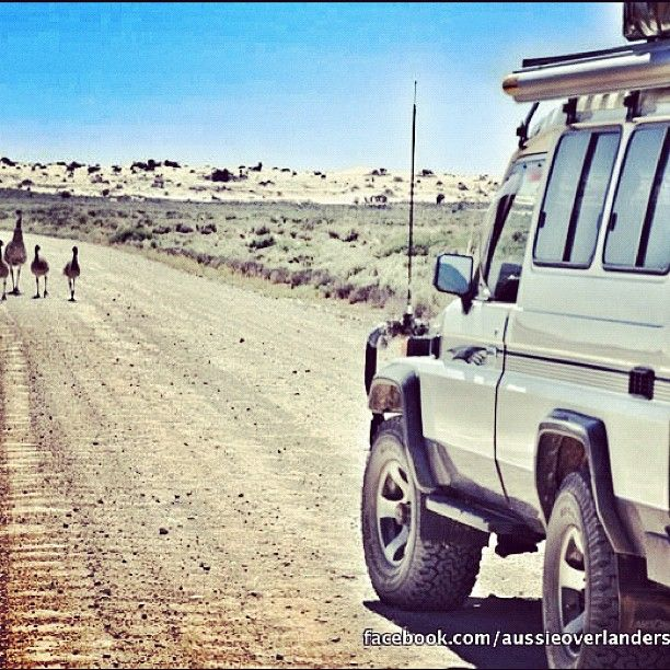 Hit the road  [Aussie Overlanders on the road in South Australia, Australia]  #aussieoverlanders #australia #southaustralia #emu #dirtroad #road #drive #toyota #4wd #overland #troopy