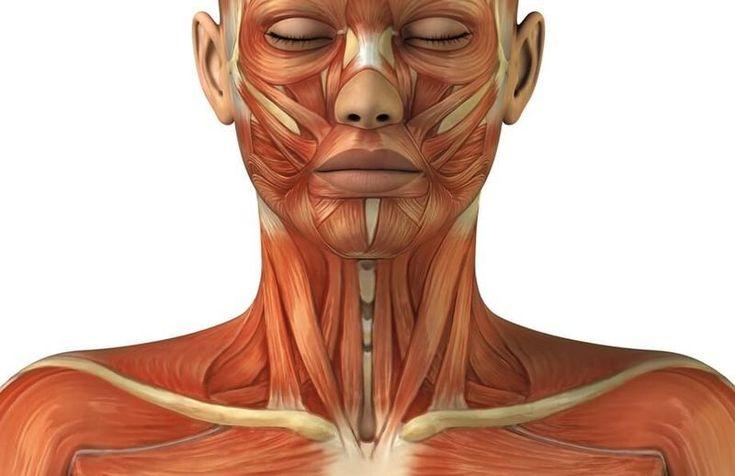 Простая, быстрая и эффективная методика самопомощи при болях в области шеи, грудного и поясничного отдела позвоночника, ребер, органов брюшной полости, головных болях.Принцип действия твист-терапии–…