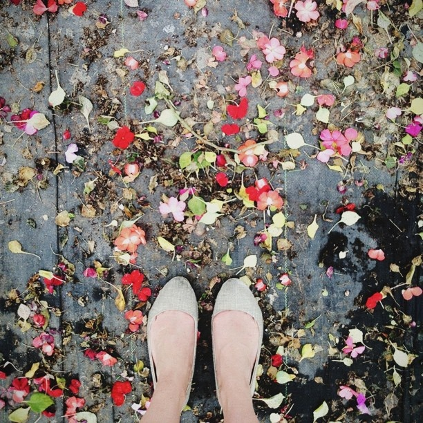 ++ photo : s. fawn deviney: Photos Kate, Roses Are Red, Wedding, Ground Photos, Rainy Morning, Instagram Photos, Flowers Und, Photos Pictures