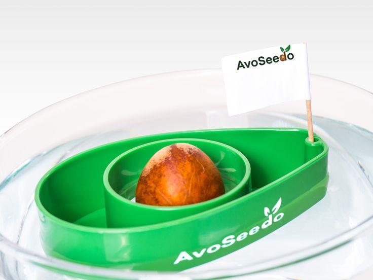 AvoSeedo - Odla Avokado