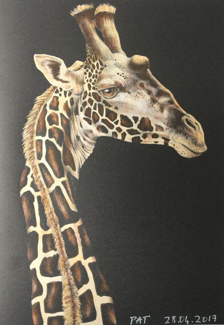 Giraffe By Jessenia Hernandez