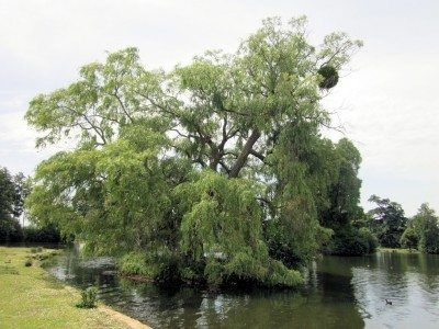 Trees And Water – Wet Soil Trees For Standing Water Areas