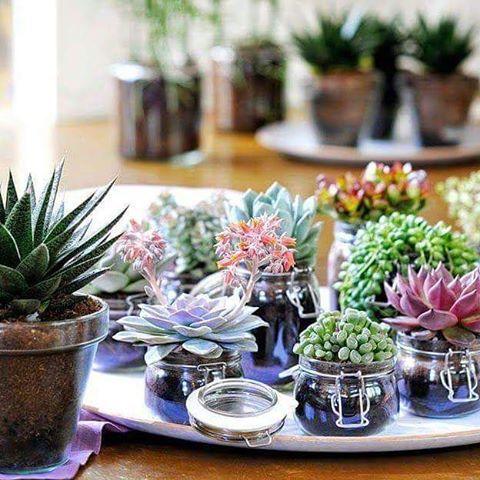 Suculentas en frascos reciclados   Cielaria.com
