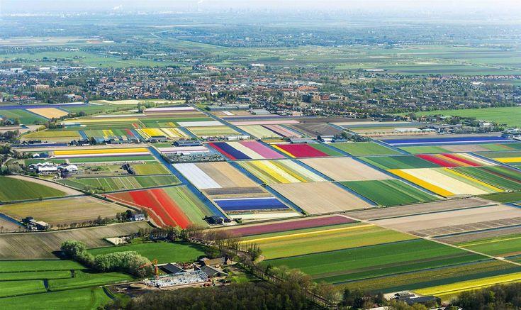 campos de tulipanes en holanda (1681×1000)