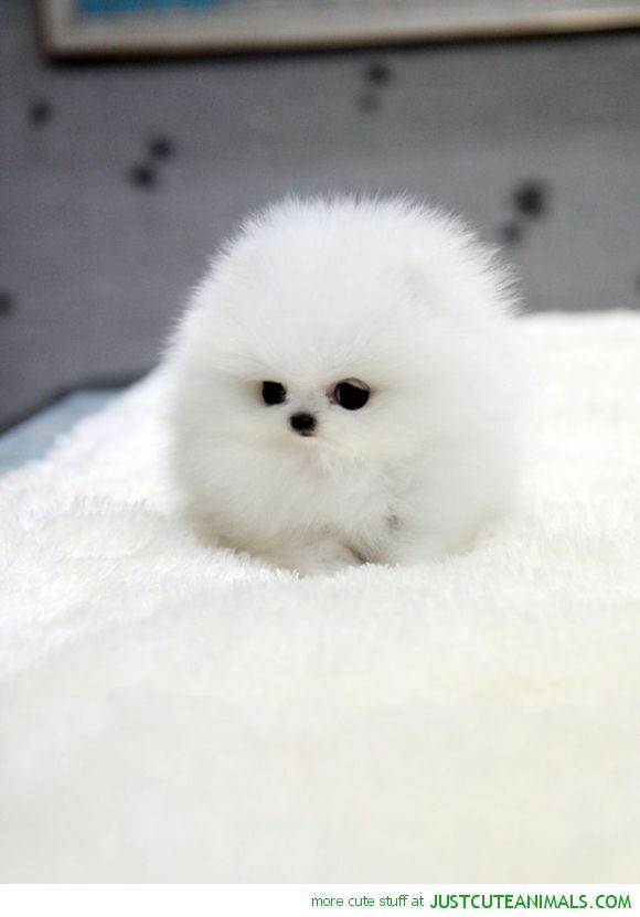 Fluff Ball #adorable #dog