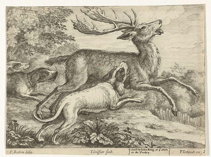Jan Griffier (I) | Jacht op een hert, Jan Griffier (I), Pierce Tempest, John King, 1655 - 1718 | Drie honden jagen op een hert in een bosrijke omgeving. Deze prent maakt deel uit van een serie van tien prenten met verschillende dieren.