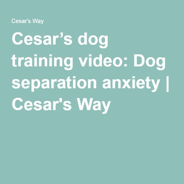 Cesar's dog training video: Dog separation anxiety | Cesars Way Read more in http://natureandhealth.net/