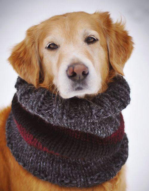 Golden Retriever, Rescue dog.Hello, and I hope that wherever you are that your neck is warm and toasty, that your tummy is full from treats and that your heart is filled with love.  xoxo,  Willie <3    Patty McGuire, Pattymac Photos