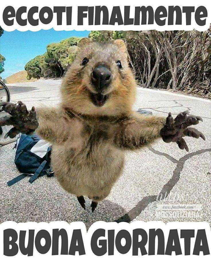 #buongiorno #buona #giornata #link #divertenti #page #facebook #Tiziana #Mosso https://www.facebook.com/MossoTiziana/ #love #animal #frasi #aforisma #citazioni