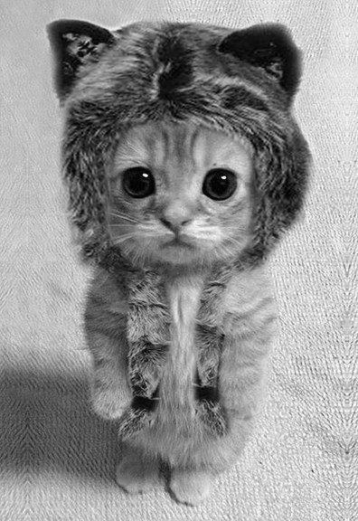 Amato Oltre 25 fantastiche idee su Gatti pazzi su Pinterest | Gattini  LV41
