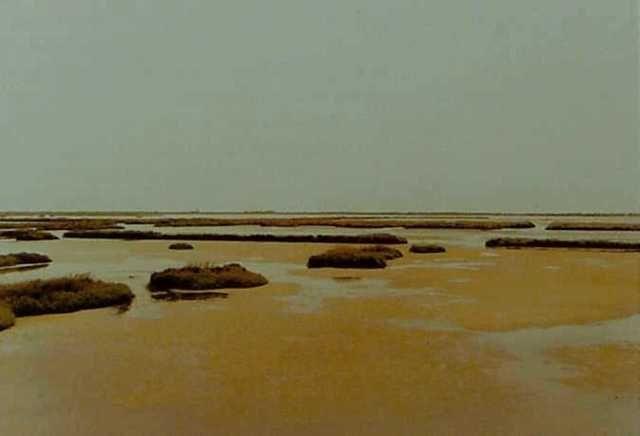 Elger Esser http://www.lindemanns.de/shop/migal/bilder/lima/99188e~2.jpg
