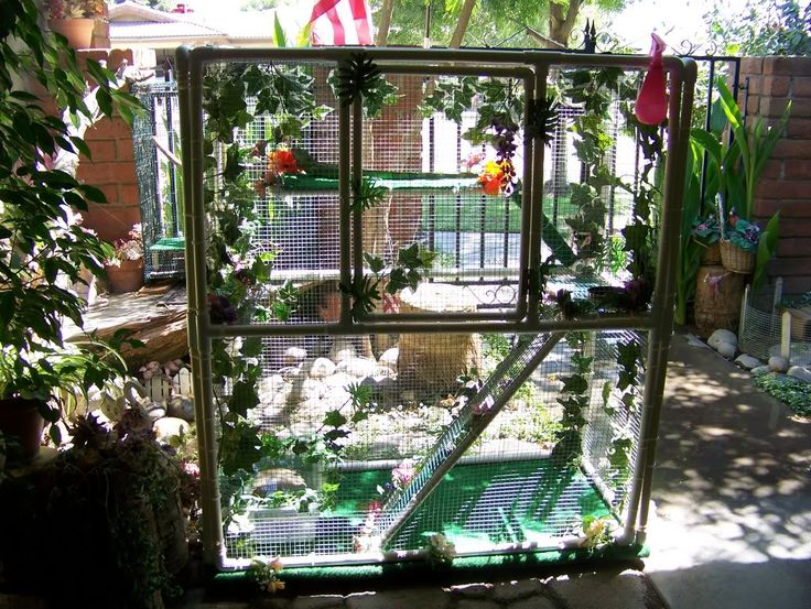 20 Best Images About Iguana Cages On Pinterest Sugar