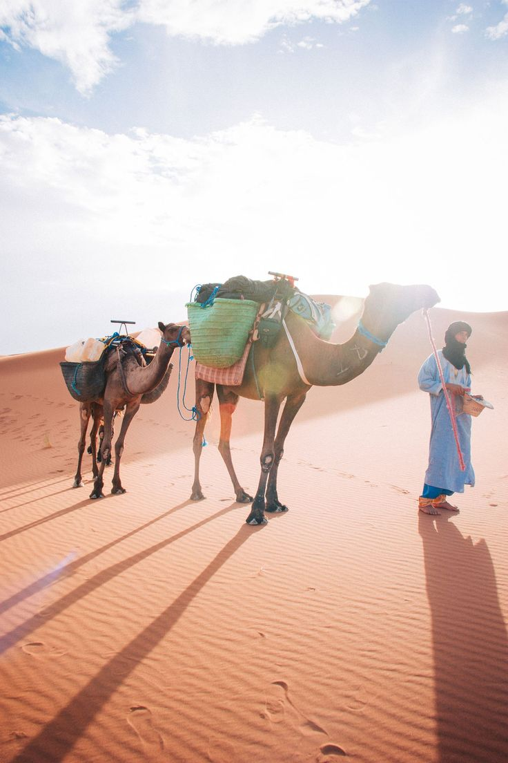 Nomad trekking with camels in the Sahara desert by Marrakech Desert Experience