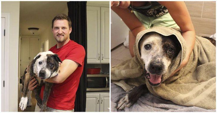 Una familia rescató a un perro de un refugio y le dio una oportunidad de pasar sus últimos días amado y cuidado.