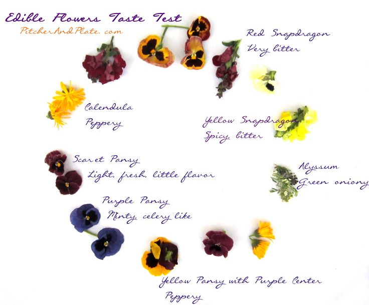 55 best with edible flowers images on pinterest edible flowers edible flower taste testg 31832634 mightylinksfo