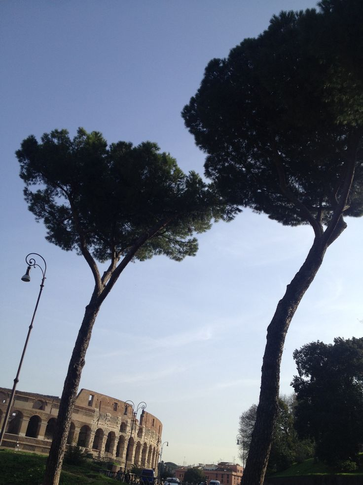 Pine trees in Rome are reminded with old ruins.