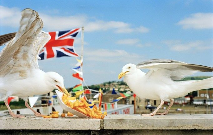 Martin Parr: Seagulls eating chips, 1996.
