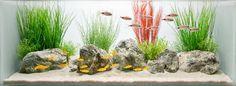 The Soft Effect of a Coceptual Decorative Freshwater Aquarium