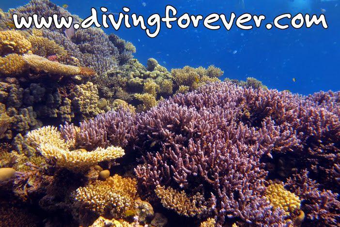 Tauchen Hurghada http://www.divingforever.com/ Unsere deutsche Tauchschule / Tauchbasis bietet Ausflüge und Tauchen in Hurghada zu besten Preise,Wählen Sie von dem was Sie wollen:Tauchausflüge, Schnuppertauchen, Spezialkurs, Tauchkurse von PADI oder CMAS. Hurghada Ausflüge / Ägypten http://www.ausfluegehurghada.com/ Unsere Hurghada Ausflüge / Ägypten bieten Tipps für Tagesausflüge zu besten Preisen. Wählen Sie von dem was Sie wollen:  Tauchen, Schnorcheln, Dolphin House, Giftun Insel…