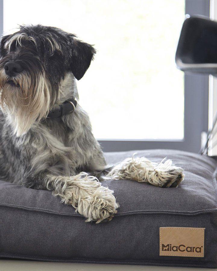Hundepude (Mørkegrå) - Lino - Petlux