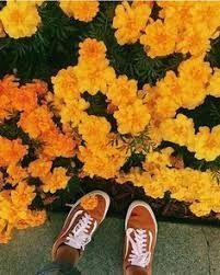 Image result for korean aesthetic orange #AllThingsYellow