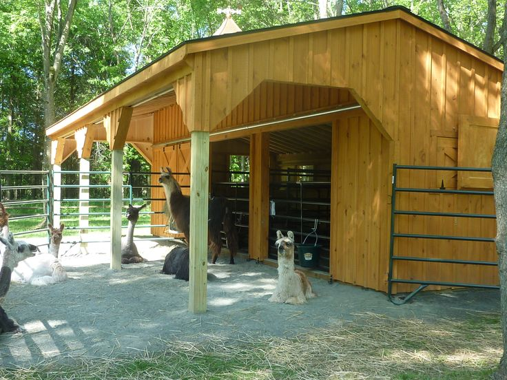 Horizon Structures prefab shedrow barns can easily be adapted for alpacas, goats or sheep. These alpacas seem to like it just fine! Contact us to get a price for a custom alpaca barn.