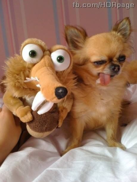 Best Funny Dog Face Images On Pinterest Animal Feelings And - Dogs looking funny with toys