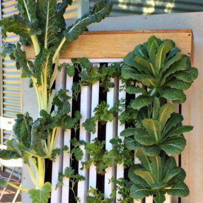 Canyonleigh cluster launch Bare Greens vertical zipgrow towers Southern Highlands NSW