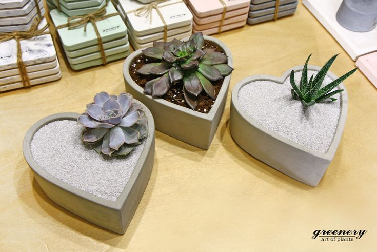 Get ready for Valentine's Day! #greenery #valentine