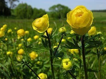 yellow wild flowers on marsh
