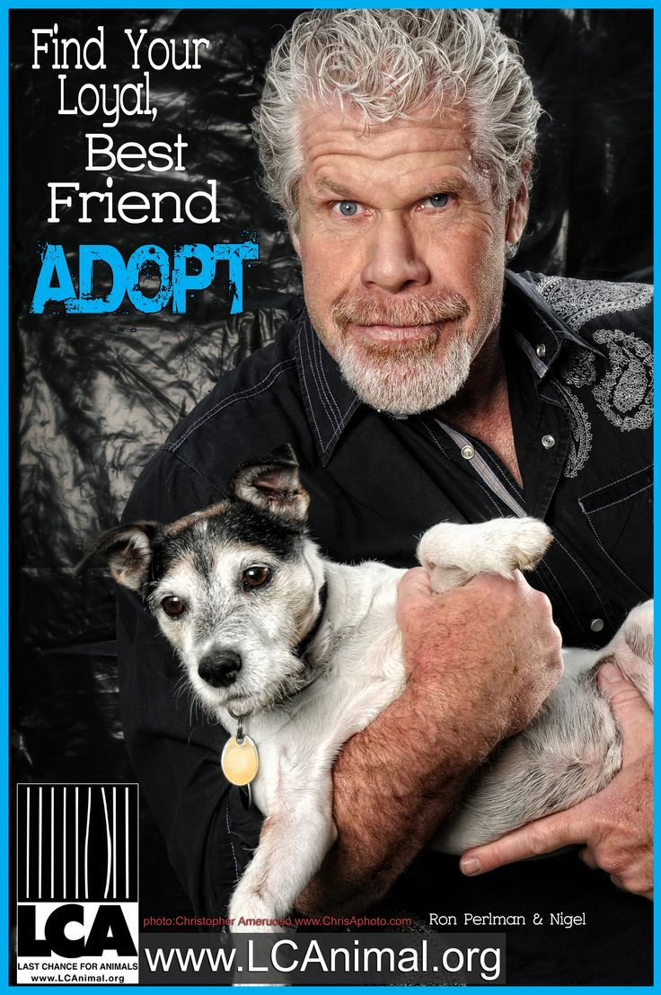 Sons of Anarchy's Ron Perlman in Last Chance for Animals PSA