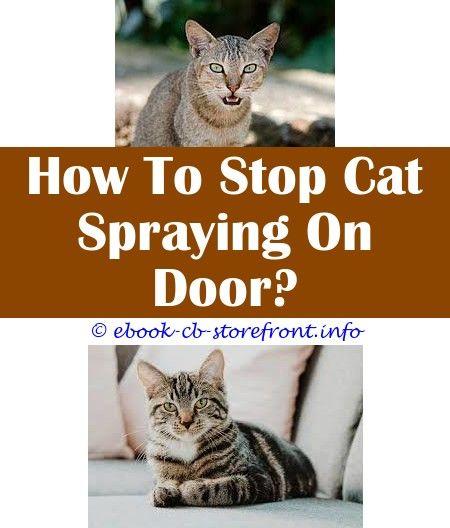 724b68311eb3842873464cd475195c1f - How To Get Rid Of Cat Dander On Furniture