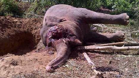 Olifant gedood voor het ivoor