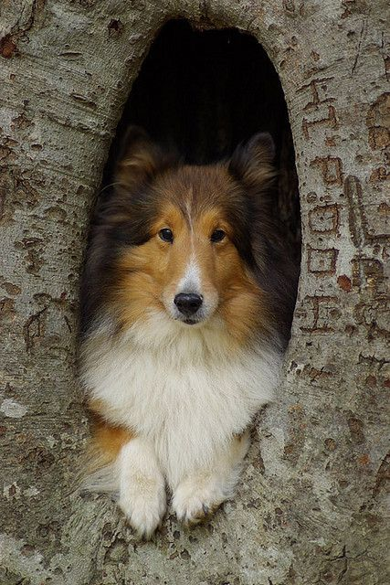 What's that, Lassie?  You've fallen in a hole in a tree?  I'll go get help!