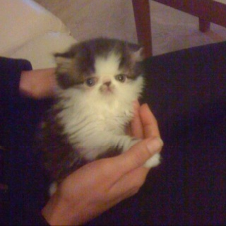 Gizmo as a baby..: Cutest Things