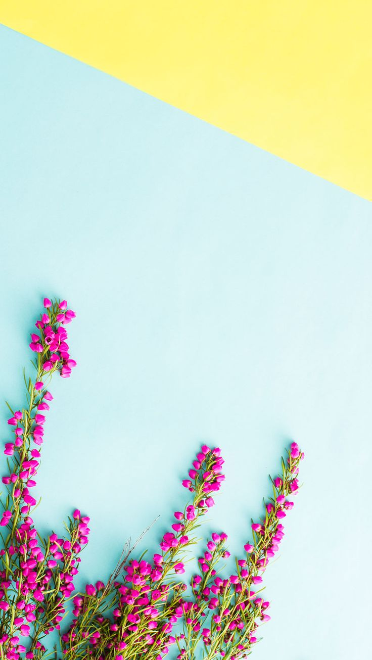 iPhone-PinkFlowers.jpg 901×1,600 pixels