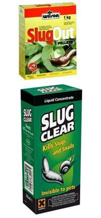 Stunning How To Kill Snails and Slugs