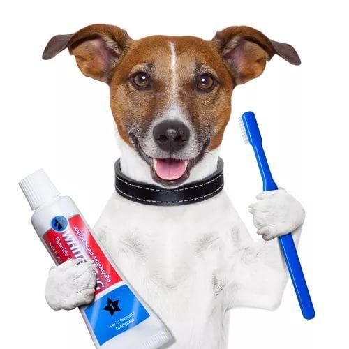 Мы не забыли, что сегодня #ДЕНЬ_ВЕТЕРИНАРА! С ПРАЗДНИКОМ !  #ВЕТЕРИНАР #ВЕТЕРИНАРНАЯСТОМАТОЛОГИЯ #ВЕТЕРИНАРИЯ #ЖИВОТНЫЕ #VETERINAR #veterinary #vet