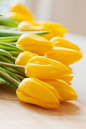 DesertRose,;,Yellow Tulips #flowers Get wowed with an amazing bouquet: http://www.bloomsybox.com/,;,