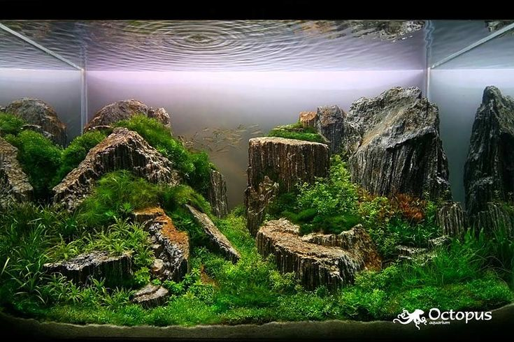Slobodan Lazarevic - Tamo daleko    Size of tank is 100 cm x 50 cm x 60 cm    Plant list:  Blyxa japonica, Riccia fluitans, Riccia rhenana, Riccardia graeffei, Pogostemon helferi,  Hemianthus micranthemoides, Lilaeopsis brasiliensis, Monosolenium tenerum, Taxiphyllum barbieri,  Flame Moss, Tonina fluviatilis, Tonina Sp,, Glossostigma elatinoides, Eleocharis acicularis, Eriocaulon sp.,  Eriocaulon setaceum, Cardamine lyrata, Rotala rotundifolia, Vesicularia dubyana, Vesicularia ferriei
