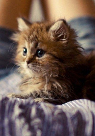 cute cat. Funny cat, cute, love cats, Funny Cat Pics, Kittens, Cat, Cats, Dogs, Puppies, Pets & Animals, Katze, Katzen, süß, gatto, gattino.