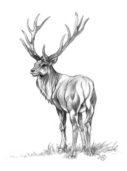 1000 ideas about dessin cerf on pinterest dibujo - Dessin bois de cerf ...